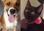 SHELTER SUNDAY: Meet Nicholas (German shepherd mix) and Lilly (black kitten)