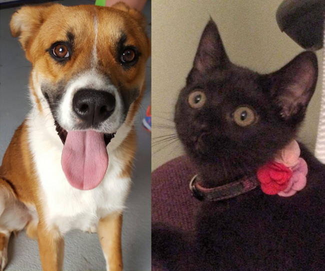 SHELTER SUNDAY: Meet Nicholas (German shepherd mix) and Lilly (black kitten)