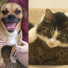 Shelter Sunday Meet Pete Puggle And Lexi Semi Long Haired Cat