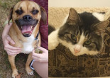 SHELTER SUNDAY: Meet Pete (puggle) and Lexi (semi-long haired cat)