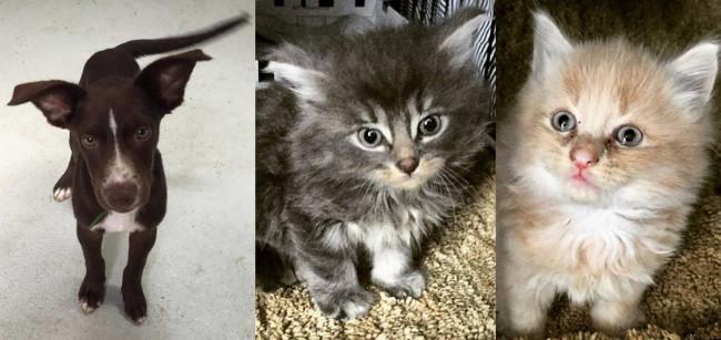 SHELTER SUNDAY: Meet Fritz (lab mix) and Kion and Kiara (bonded kittens)