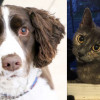 SHELTER SUNDAY: Meet Maddox (springer spaniel mix) and Penny (calico cat)