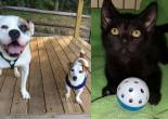 SHELTER SUNDAY: Sam and Finn (bulldog and Jack Russell terrier) and Eddie (black kitten)
