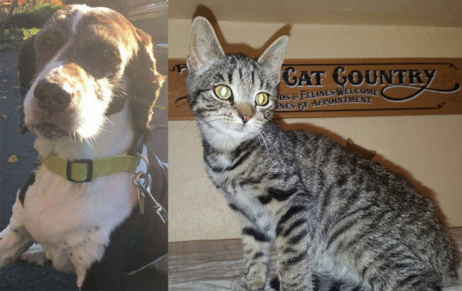 SHELTER SUNDAY: Meet Freckles (senior springer spaniel) and Logan (striped tabby kitten)
