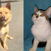 SHELTER SUNDAY: Meet Rojo (cattle dog mix) and Sara (tabby kitten)