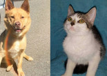 SHELTER SUNDAY: Meet Rojo (cattle dog mix) and Sara (tabby kitten)