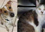 SHELTER SUNDAY: Meet Lucky (Jack Russell terrier/beagle mix) and Misty (tabby cat)