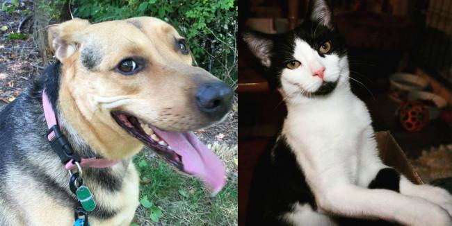 SHELTER SUNDAY: Meet Lady (German shepherd mix) and Oreo (tuxedo kitten)