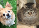 SHELTER SUNDAY: Meet Bella Rose (long-haired Chihuahua) and Molly (long-haired mix)