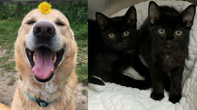SHELTER SUNDAY: Meet Shea (German shepherd mix) and Luna and Rain (black sister kittens)