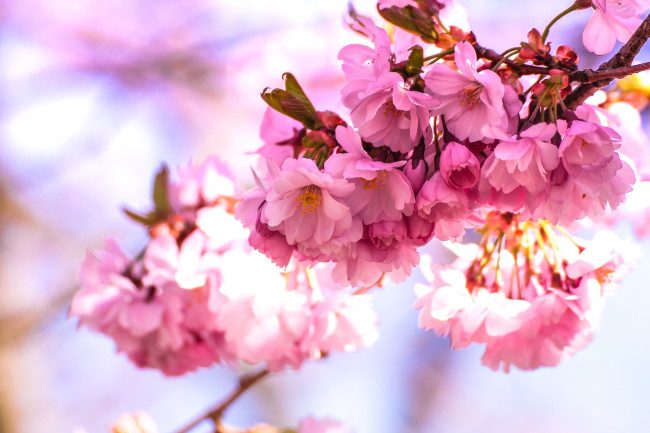40th annual Cherry Blossom Festival blooms with free entertainment at Kirby Park in Wilkes-Barre April 22-23
