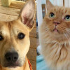 SHELTER SUNDAY: Meet Sonic (pit bull mix) and Gas Station Sunny (longhair tabby)