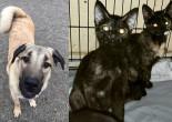 SHELTER SUNDAY: Meet Axel (Anatolian shepherd) and Paige and Piper (tortoiseshell kittens)