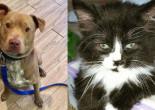 SHELTER SUNDAY: Meet Pablo (Shar Pei/pit bull mix) and Juliette (longhair kitten)