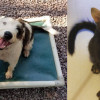 SHELTER SUNDAY: Meet Harpo and Chico (bonded brothers) and Drake (polydactyl kitten)