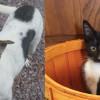 SHELTER SUNDAY: Meet Daisy (foxhound mix) and Bugsy (tuxedo kitten)