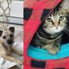 SHELTER SUNDAY: Meet Rocky (Cairn terrier mix) and Eli (striped tabby kitten)