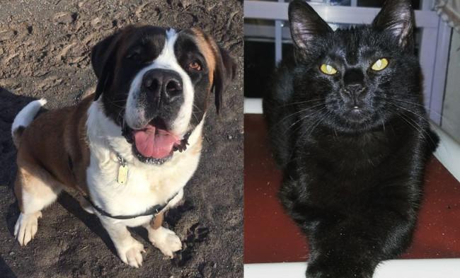 SHELTER SUNDAY: Meet Izzy (Saint Bernard) and Juno (black kitten)