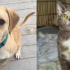 SHELTER SUNDAY: Meet Hercules (bulldog mix) and Remi (dilute calico kitten)