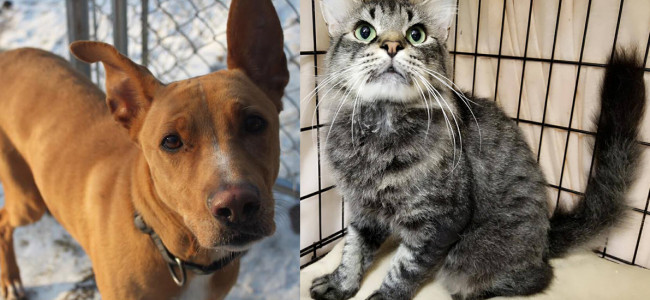 SHELTER SUNDAY: Meet Ginger (whippet mix) and Arthur (domestic medium hair cat)