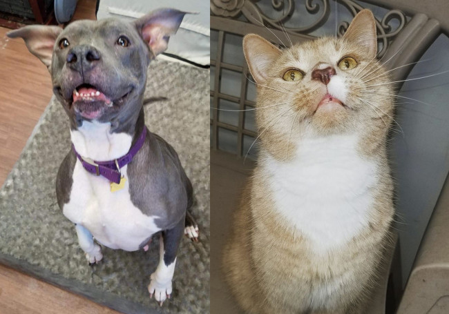 SHELTER SUNDAY: Meet Jazz (pit bull mix) and Dennis (orange tabby)