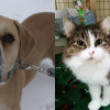 SHELTER SUNDAY: Meet Hercules (bulldog mix) and Casey (tabby cat)