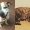 SHELTER SUNDAY: Meet Renesmee (bulldog/pit bull mix) and Molly (tortoiseshell cat)