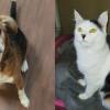 SHELTER SUNDAY: Meet Eli (beagle mix) and Riesling (calico cat)