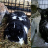 SHELTER SUNDAY: Meet Dilly and Spice (lop-eared rabbits) and Mouse (tuxedo cat)