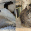 SHELTER SUNDAY: Meet Evelyn (white tabby cat) and Lidsy (long hair cat)