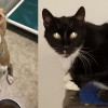 SHELTER SUNDAY: Meet Dexter (pit bull mix) and Allen (tuxedo cat)