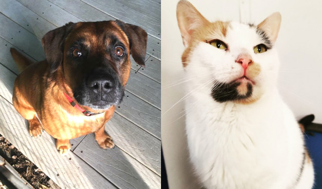 SHELTER SUNDAY: Meet Brownie (hound mix) and Sunshine (calico cat)