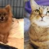SHELTER SUNDAY: Meet Danielle (Pomeranian) and Tiny (tabby cat)