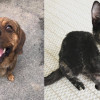 SHELTER SUNDAY: Meet Jack (beagle mix) and Poppy (tortoiseshell cat)