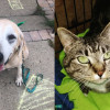 SHELTER SUNDAY: Meet Diesel (senior yellow Lab) and April (striped tabby cat)