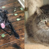 SHELTER SUNDAY: Meet Spirit (black Lab mix) and Lidsy (long hair cat)