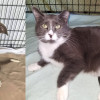 SHELTER SUNDAY: Meet Gracie (pit bull mix) and Jemma (gray and white cat)