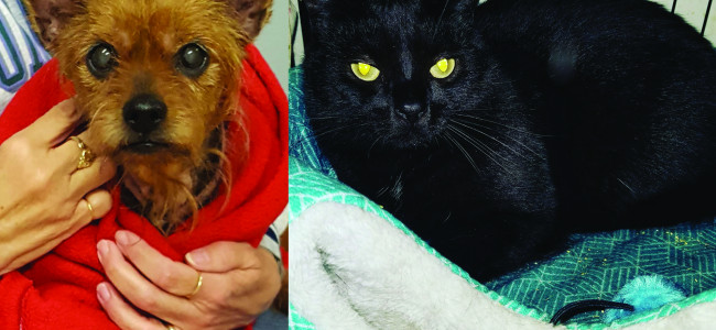 SHELTER SUNDAY: Meet Heidi (Yorkshire terrier) and Parker (black cat)