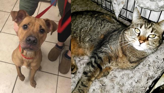 SHELTER SUNDAY: Meet Holly (Shar-Pei mix) and Tiny (striped tabby cat)