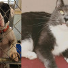 SHELTER SUNDAY: Meet Nicky (bulldog mix) and Heather (gray and white cat)
