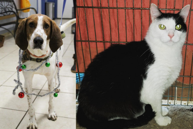 SHELTER SUNDAY: Meet Pete (coonhound) and Max (tuxedo cat)