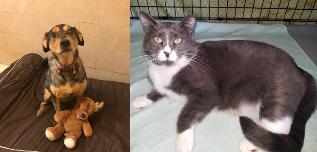 SHELTER SUNDAY: Meet Babe (cattle dog mix) and Jemma (gray and white cat)