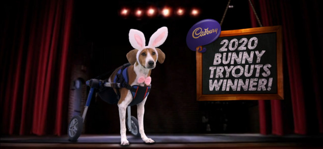Enter your pet in Hershey's Cadbury Bunny Tryouts to win a commercial appearance and $5,000