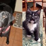 Maxine-Maggie-Morgan-shelter-adopt