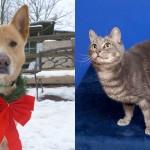 shea-gandolph-shelter-adopt