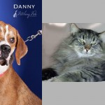 danny newton shelter adopt