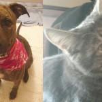 maddie-oliver-shelter-adopt