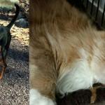 Delilah Mr. Scruffles shelter adopt