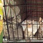 Maxine 7 kittens shelter adopt