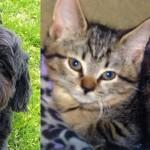matilda darcy dash shelter adopt